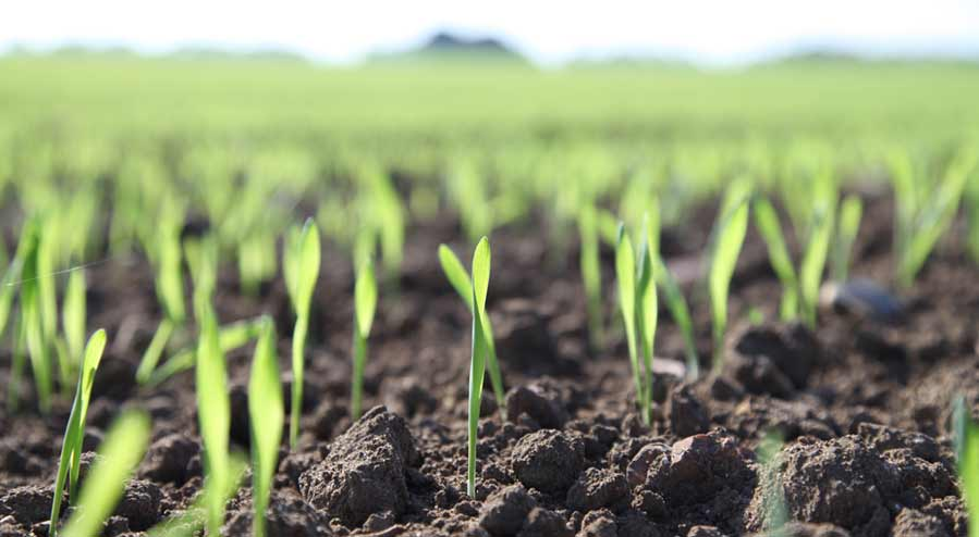 Land Drainage Sustainable Drainage Systems William