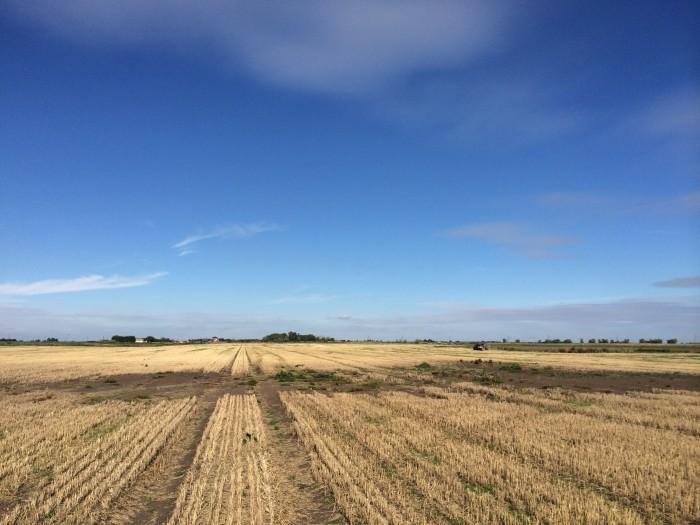 Littleport Wet Field
